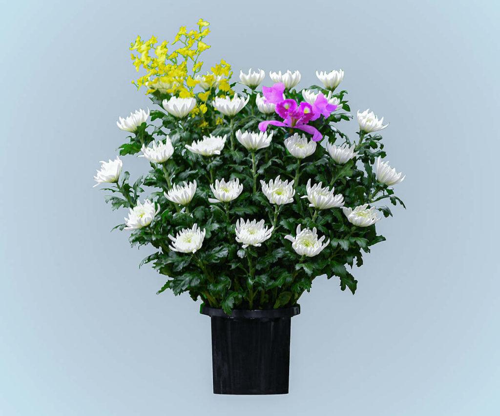 ご供花 -和風-
