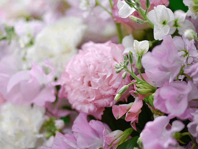 使用花材のイメージ